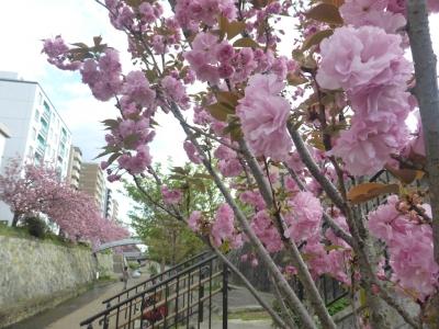 京都 堀川