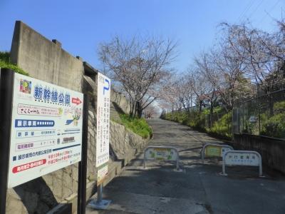 摂津市鳥飼 新幹線公園 桜
