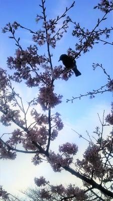 着物:小鳥のいる風景