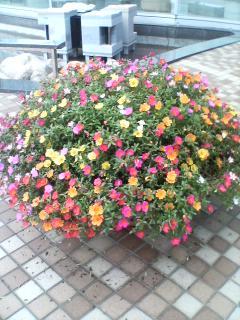 ホテル入り口前の花