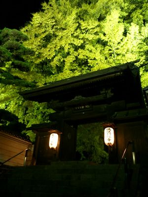 仏法紹隆寺(諏訪)の大銀杏