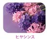 ヒヤシンスs.jpg