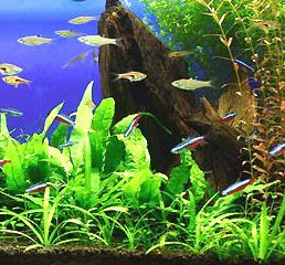 7月熱帯魚.jpg