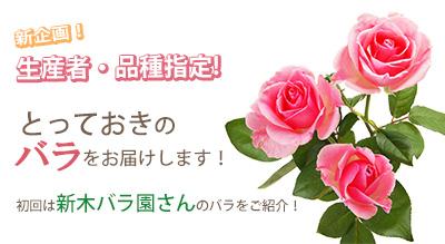 新木バラ園さんのバラs.jpg
