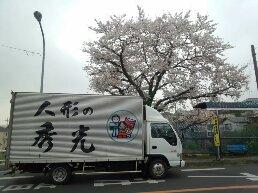 じゅんさい池の桜とトラック