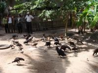 先進地区の視察(養鶏)