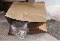 ミケと紙袋2