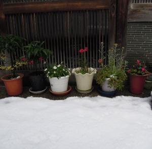 たきやさんの植木鉢