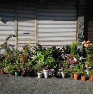 たきやさんの向かいの植木鉢