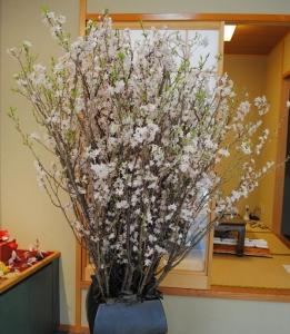 メボソさんの桜