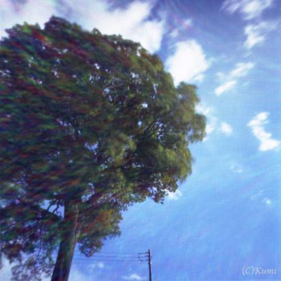 風なびく木