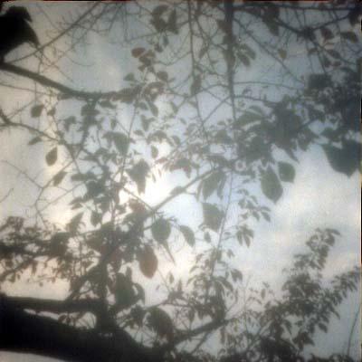 ホルガ+zで枝と空