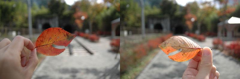 葉っぱの出会い