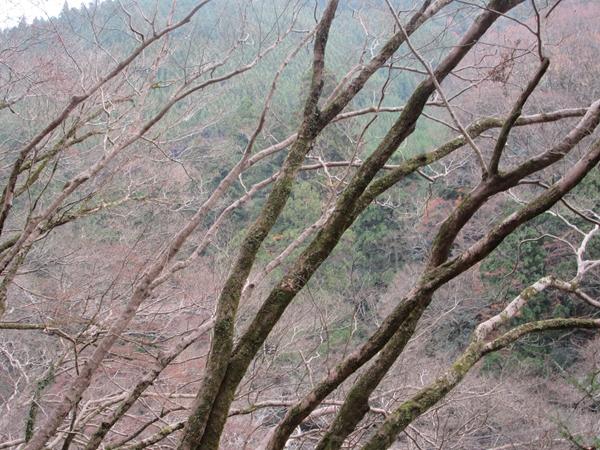 初冬の京都、高山寺