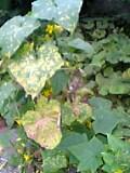 20060704_188949.jpg