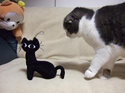 黒猫とハロ