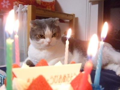 ハロ 5歳 ケーキ編 6