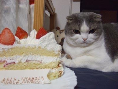 ハロ 5歳 ケーキ編 7