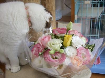 リズのお花