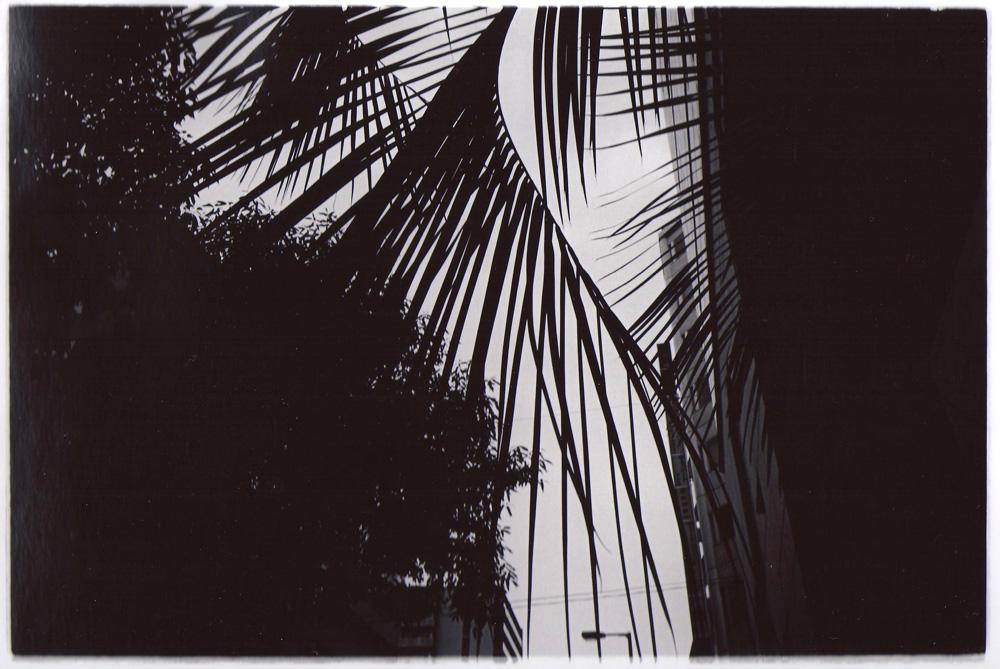 Leica mp summarit M35mmF3.5 Tri-x