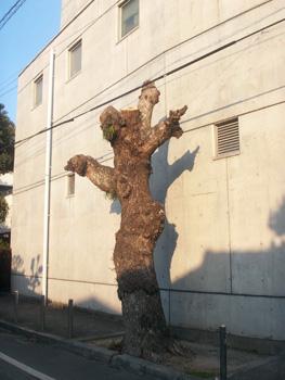 シュールな立木