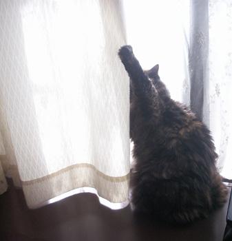 爪がカーテンに引っかかったサンディ