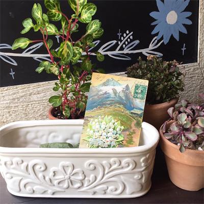フランス製の爽やかな白い陶器のプラントホルダー(鉢カバー)