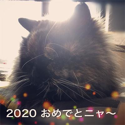 我が家の猫 サンディ