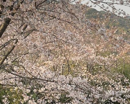 桜328.2