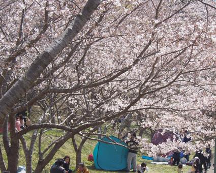 桜の里公園2