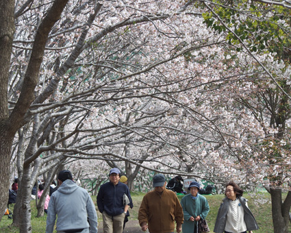 桜の里公園4
