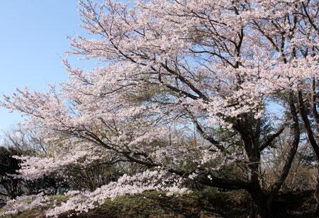 県立印旛沼公園