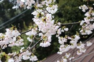 花見クルージング
