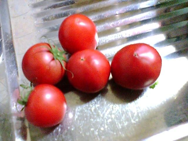 材料のトマトです