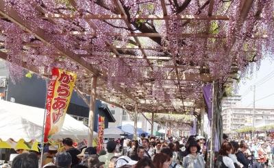藤祭2014