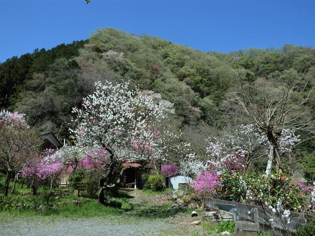山の家ご近所