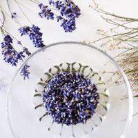 blog-lavender-flower-hm.jpg