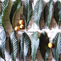 blog-biwa-leafs.jpg
