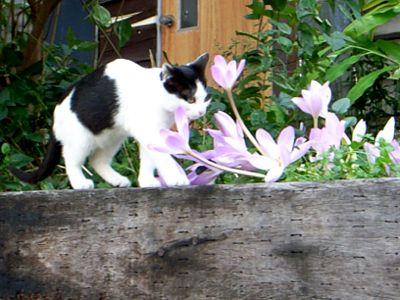 小樽 子猫 かわいい