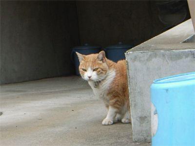 豪徳寺 猫