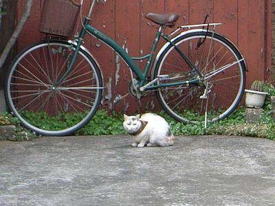 豪徳寺 猫 自転車