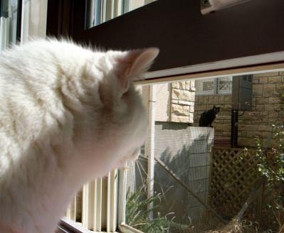 猫ちゃんとクロチャン