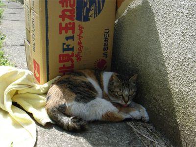 川崎 地域猫