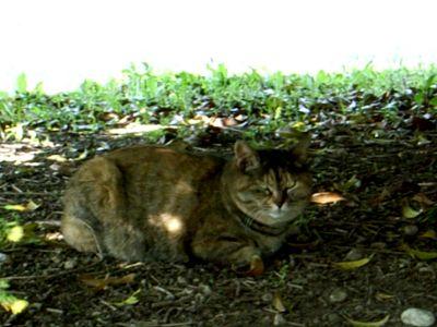 川崎 野良猫
