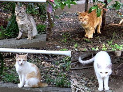 川崎 野良猫一家
