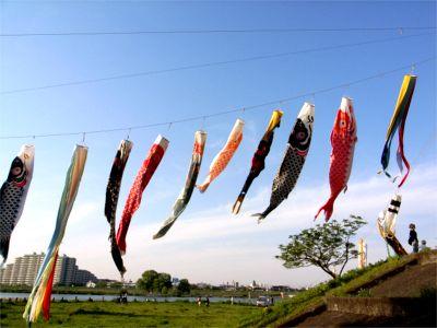 多摩川 鯉のぼり