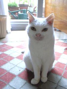 16歳 猫ちゃん
