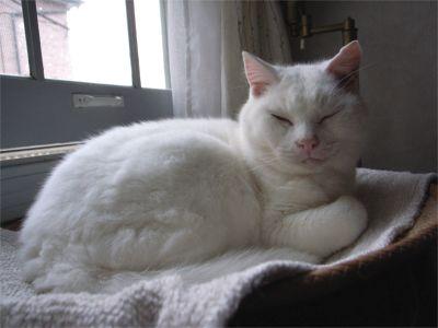猫ちゃん おやすみ