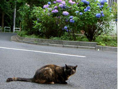 団地 野良猫 サビちゃん