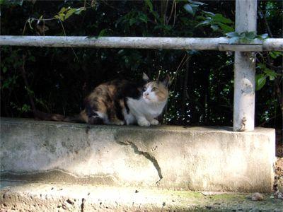 団地 野良猫 ミケちゃん